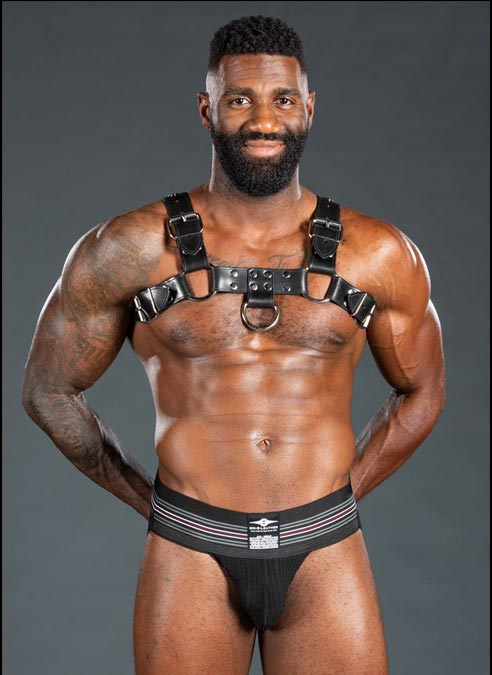 Mr. S Leather Bulldog Harness Latigo Black Small/Medium