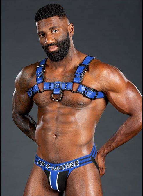 Mr. S Leather Dark Room Bulldog Harness Blue Small / Medium